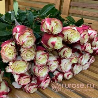 Роза Эквадор Sweetness (Свитнес)
