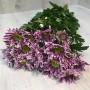 Кустовая хризантема Saba