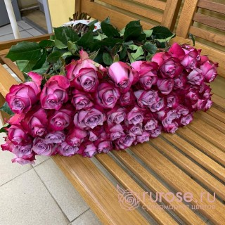 Роза Эквадор Deep-purple (Дип перпл)