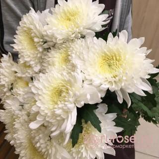 Deka белая | Хризантема одноголовая белая