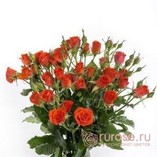 Роза Alegriya
