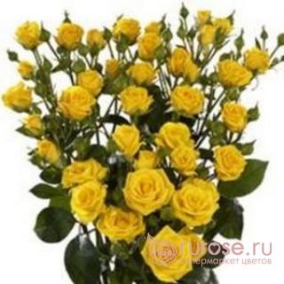 Роза Shine