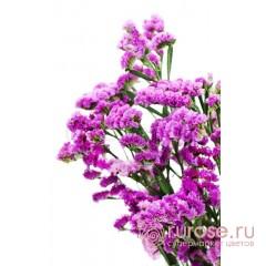 Статица фиолетовая
