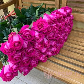 Роза Эквадор Pink-floid (Пинк флойд)