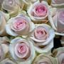Роза Sweet Revival