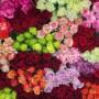 Цветы оптом