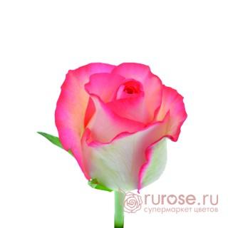 Роза Jumilia (Джумилия)