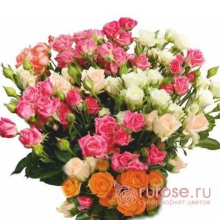 Роза кустовая Spray (Спрей)