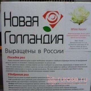 Саженец белой розы White Naiomi