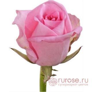 Роза Revival