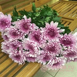 Deka темно-розовая | Хризантема одноголовая темно-розовая