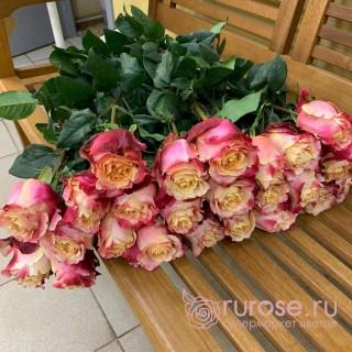 Роза Эквадор 3D (3Д)