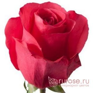 Роза Hotshot (Хотшот)